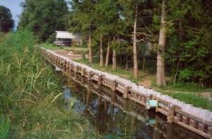 Woodland canal bank St. John